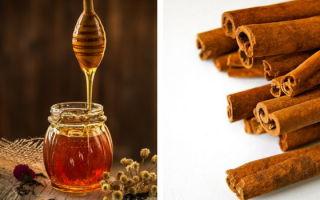 Медовая вода с корицей натощак для похудения: рецепт и отзывы