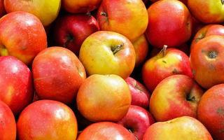 Яблоко: витамины, состав (БЖУ), микроэлементы и калорийность