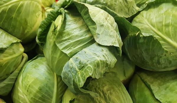 капустная диета 14 дней отзывы и результаты фото
